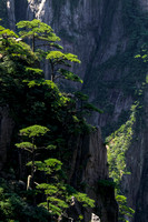On a vertical slope; Huangshan, CHina